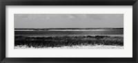 Shore Panorama IV Framed Print