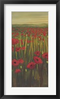 Red Poppies in Field I Framed Print