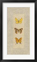 Butterfly Trio I Framed Print
