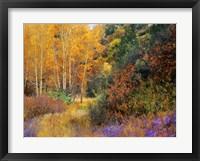 Lost Canyon Larkspurs I Framed Print