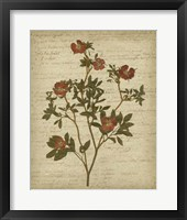 Framed Romantic Pressed Flowers I
