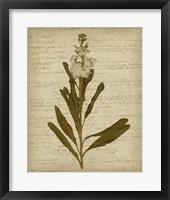 Framed Romantic Pressed Flowers III