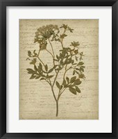 Framed Romantic Pressed Flowers IV