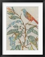 Aviary Collage II Framed Print