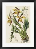 Framed Spring Orchid I
