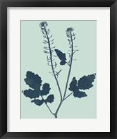 Framed Indigo & Mint Botanical Study I