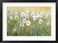 Daisy Spring I Framed Print