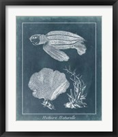 Azure Sea Turtle Study II Framed Print