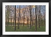 Framed Secret Sunset