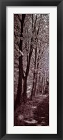 A Walk To Remember I Framed Print
