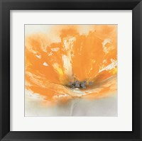Wild Orange Sherbet I Framed Print