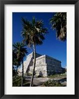Framed Palm trees near El Castillo
