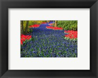 Framed Blue Dutch Tulip Flowerbed