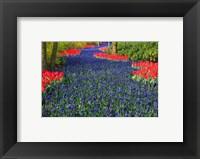 Framed Blue Dutch Tulip Flowerbed