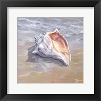 Framed Whelk
