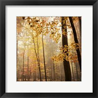 Framed Autumn Blush