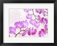 Framed Fluttering Orchid I