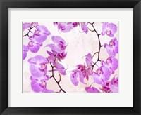 Framed Fluttering Orchid II