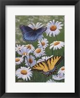 Framed Butterflies & Daisies