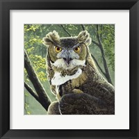 Framed Great Horned Owl