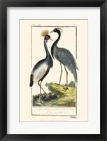 Framed Buffon Cranes & Herons II