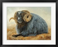 Framed Baa Baa Black Sheep