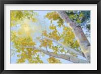 Framed Aspen Canopy