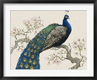 Peacock & Blossoms I Framed Print