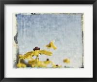 Framed Blackeyed Susans I