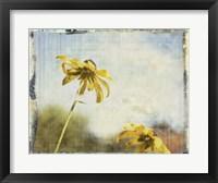 Framed Blackeyed Susans II