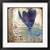 Blooming Purple I Framed Print
