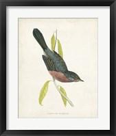 Framed Dartford Warbler