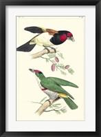 Framed Lemaire Birds III