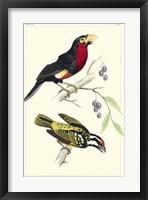Framed Lemaire Birds IV