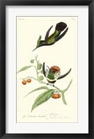 Framed Lemaire Hummingbirds III
