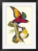 Framed Lemaire Parrots I