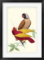 Framed Lemaire Parrots II