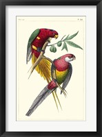 Framed Lemaire Parrots III