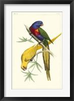 Framed Lemaire Parrots IV