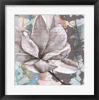 Pastel Magnolias II Framed Print