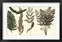 Framed Fern Leaf Folio I