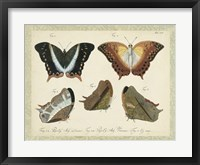 Bookplate Butterflies Trio III Framed Print