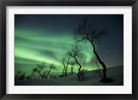 Framed Northern Lights in the arctic wilderness, Nordland, Norway