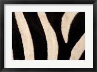 Framed Close-up of Zebra Stripes, Masai Mara, Kenya