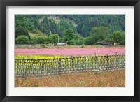 Framed Farmland of Canola and Buckwheat, Bumthang, Bhutan