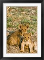 Framed Africa, Tanzania, Katavi, lion cubs playing