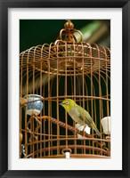 Framed Hong Kong, Bird Garden, Market, Caged pet birds