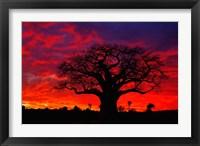 Framed African baobab tree, Tarangire National Park, Tanzania