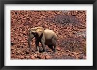 Framed Africa, Namibia, Puros. Desert dwelling elephants of Kaokoland.