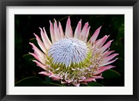 Framed Flowers, Kirstenbosch Gardens, South Africa